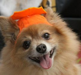 A CALL TO PAWS–HALLOWE'EN DOG COSTUME PARTY FOR CHARITY